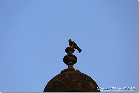 dome-bird