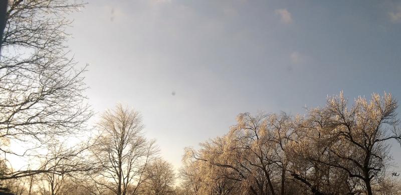 Trees-silver_LI
