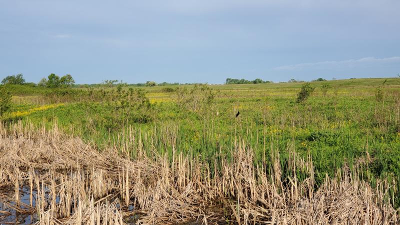 Prairie morn5