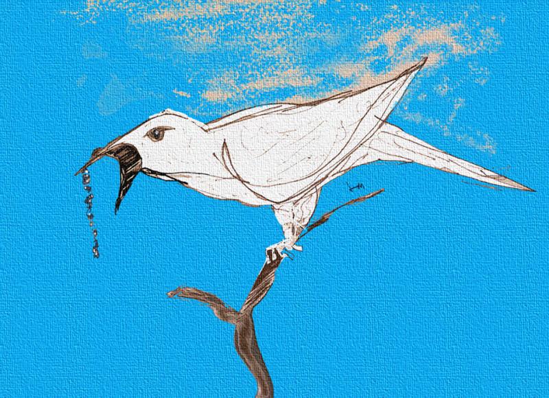 Bellbird3